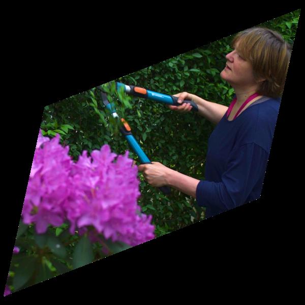 Rian Rietveld snoeit de heg in haar tuin