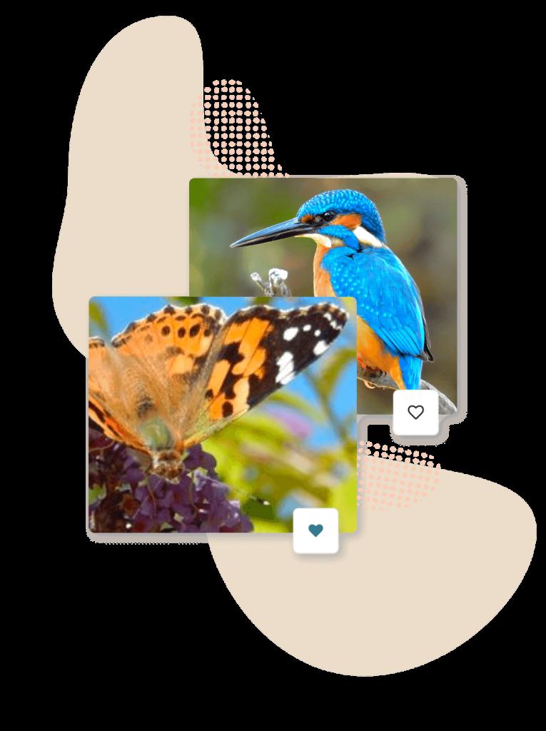 Foto's dieren in natuur